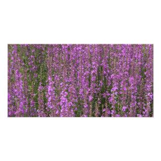 Flower fields photo card