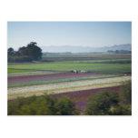 Flower Fields Postcard