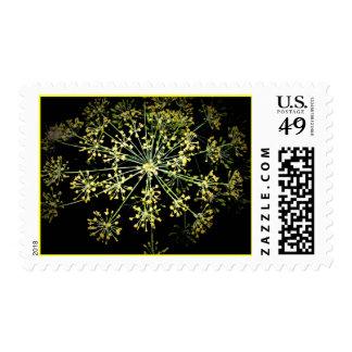 Flower Fireworks Stamps #1