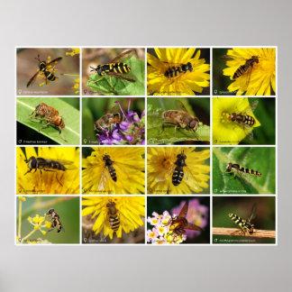 Flower Flies Poster