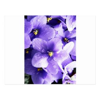Flower Floral Nursery Peace Cute Superb nice fashi Postcard