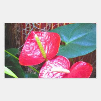 Flower Floral photos from Longwood Gardens Rectangular Sticker