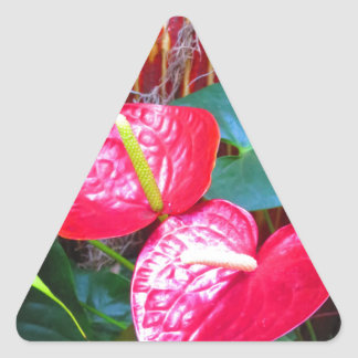 Flower Floral photos from Longwood Gardens Triangle Sticker