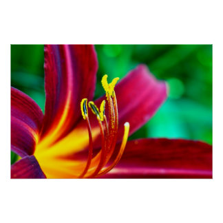 Flower flower bloom lily posters
