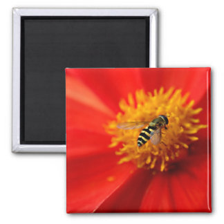Flower Fly 2 Inch Square Magnet
