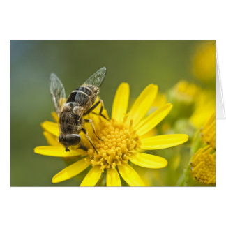 Flower Fly on Tansy Ragwort Stationery Note Card