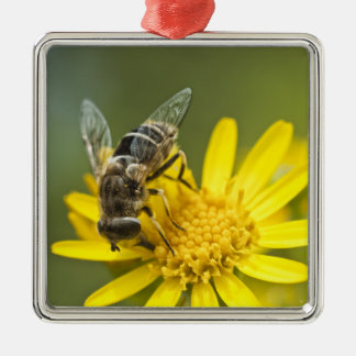 Flower Fly on Tansy Ragwort Christmas Tree Ornaments