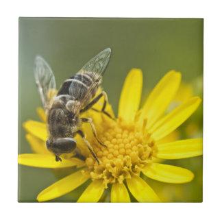 Flower Fly on Tansy Ragwort Tile