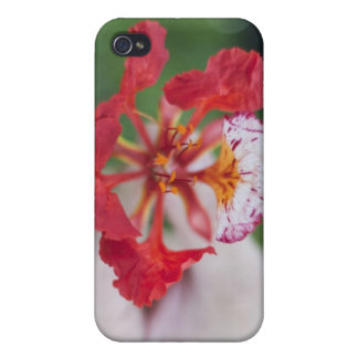 """Flower For You"" Hard Shell Case for iPhone 4/4S"