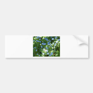 flower,forget-me-not car bumper sticker