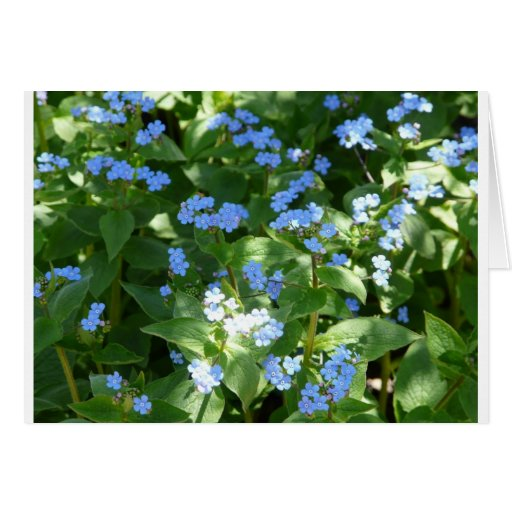 flower,forget-me-not card