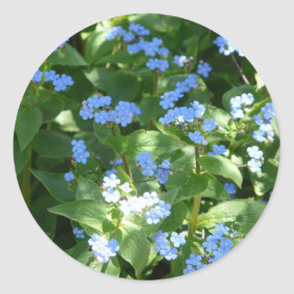 flower,forget-me-not classic round sticker