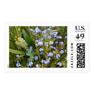 Flower Forget me not Postage