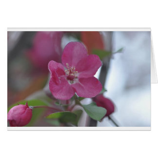 flower from crabapple tree card