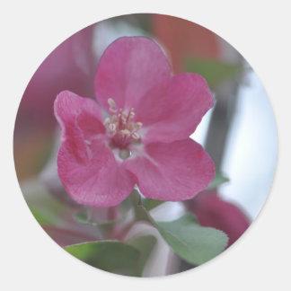 flower from crabapple tree classic round sticker