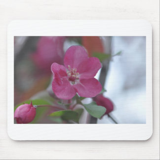 flower from crabapple tree mouse pad