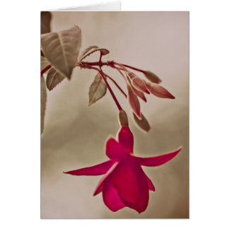 Flower Fuchsia in pink Greeting Card