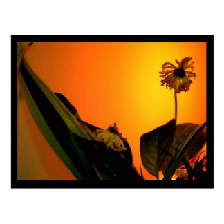 Flower Glow Postcard