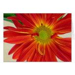 Flower Greeting Card Customizable