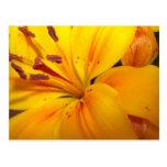 Flower Greetings Card Postcard