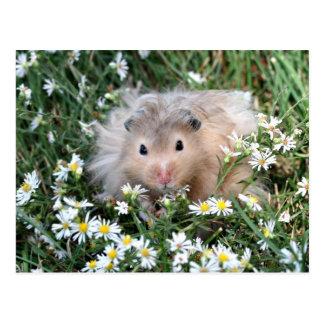 Flower hamster postcard