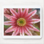 flower,hen and chicks bloom mouse pads