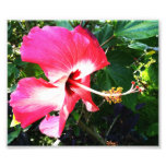 Flower in Bloom Pink Photograph