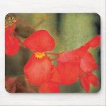 flower in spring tapete de raton