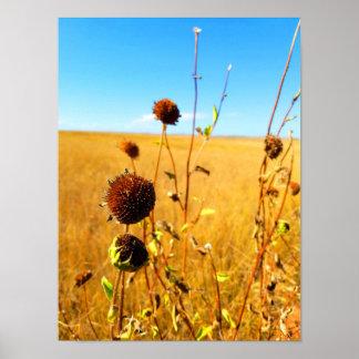 Flower in the Badlands Poster