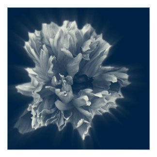 flower in the foggy night poster