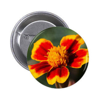 flower in the garden 2 inch round button