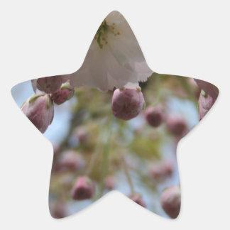 Flower in the Spring Star Sticker