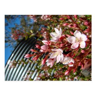 Flower infront of Water Tank Postcard