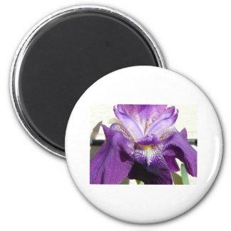 flower, iris purple magnet