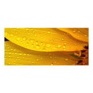 Flower - It s sunny but raining Rack Cards