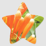 Flower.jpg anaranjado pegatina en forma de estrella