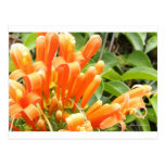Flower.jpg anaranjado postal