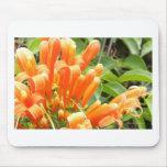 Flower.jpg anaranjado tapete de ratones