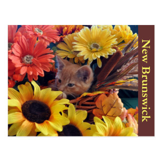 Flower Kitty Cat Kitten Staring, Fall Colors Tabby Postcard