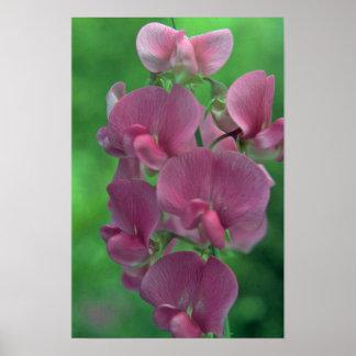 Flower Ladder Poster