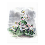 Flower Ladies Daisy Animated Flowers Grandville Post Cards