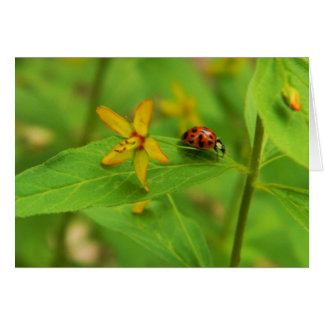 Flower & Ladybug Card