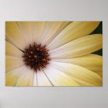 Flower Macro Posters