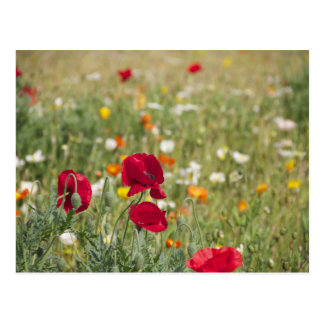 Flower Meadow Postcards