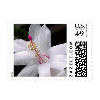 Flower mf 172 postage stamps