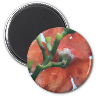 Flower mf 333 magnet