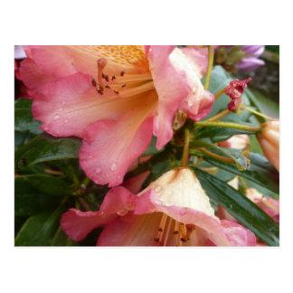 Flower mf 550 post cards
