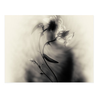 Flower mystery black and white illustration postcard