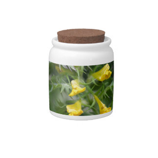 Flower of a crested cow wheat candy jar