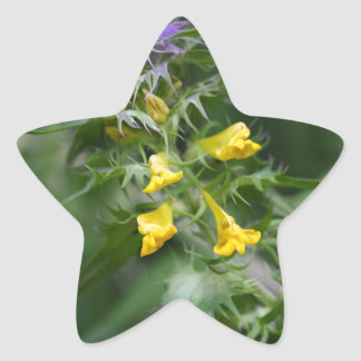 Flower of a crested cow wheat star sticker